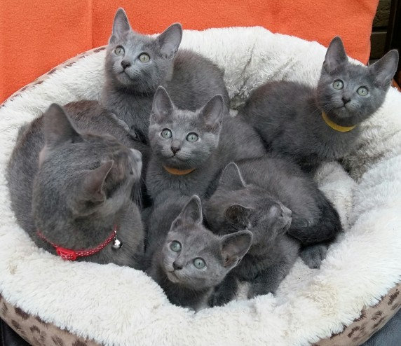semi feral kittens