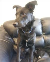 CIRCA Border Collie Mix: An adoptable dog in Red Deer, AB